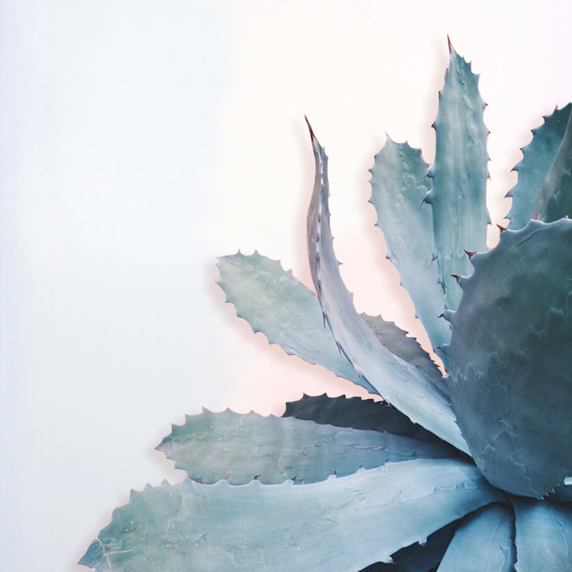 -Plants -1