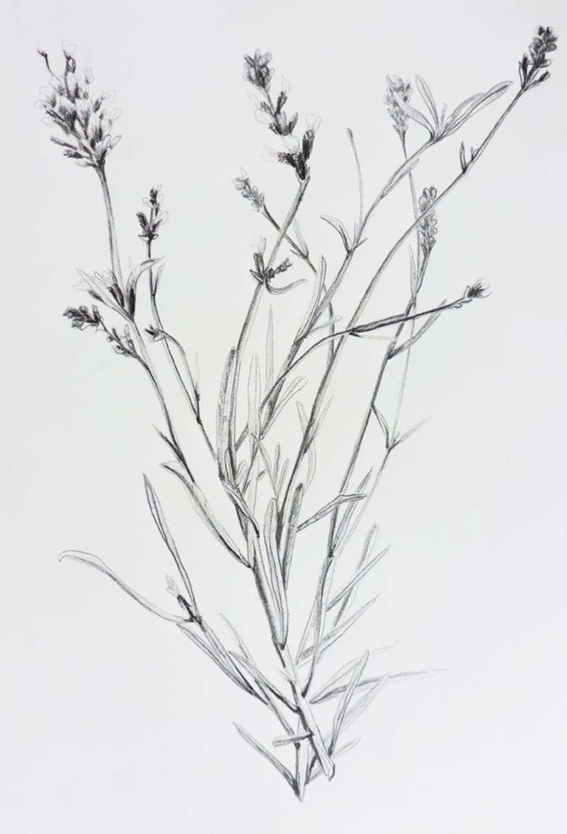 Botánica 1