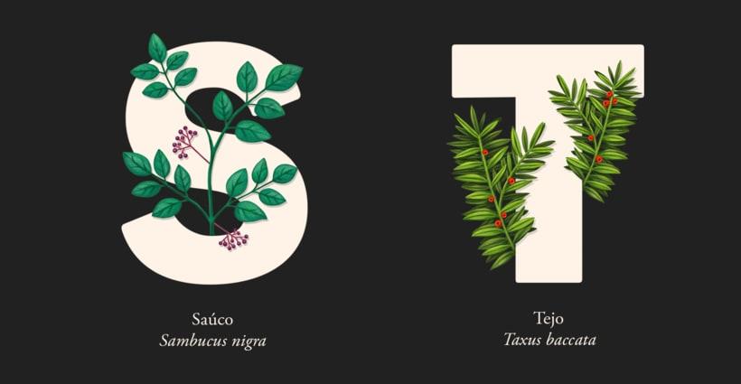 EL ABECEDARIO DE PLANTAS Y FLORES DE PIXELBOX 11