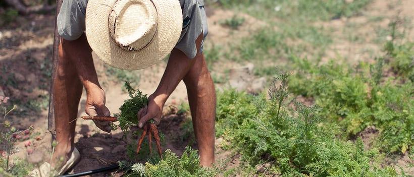 SILVESTRE Agricultura Ecològica 0