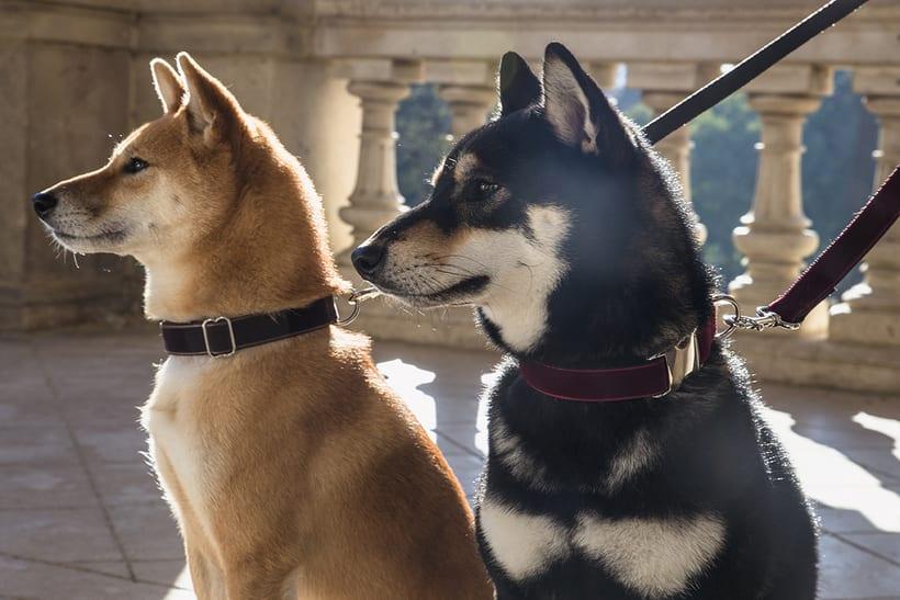 Dogui Dog 1