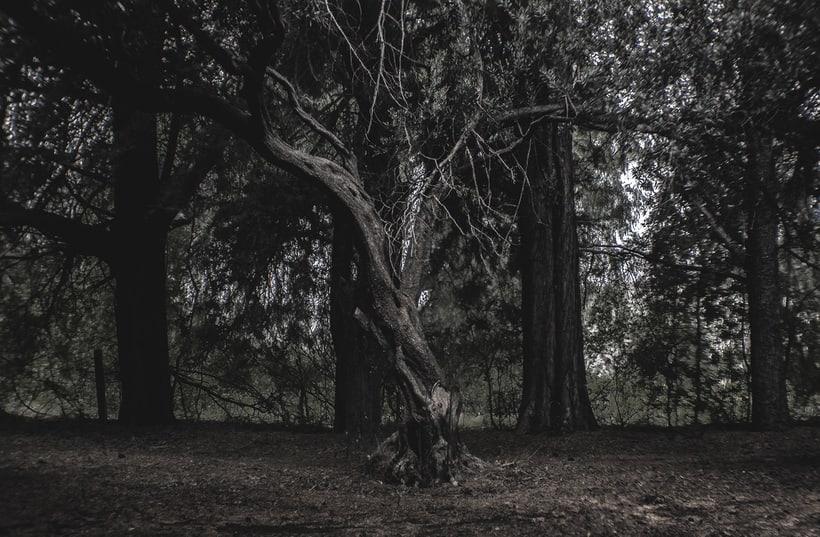 La desolación del ser.  4