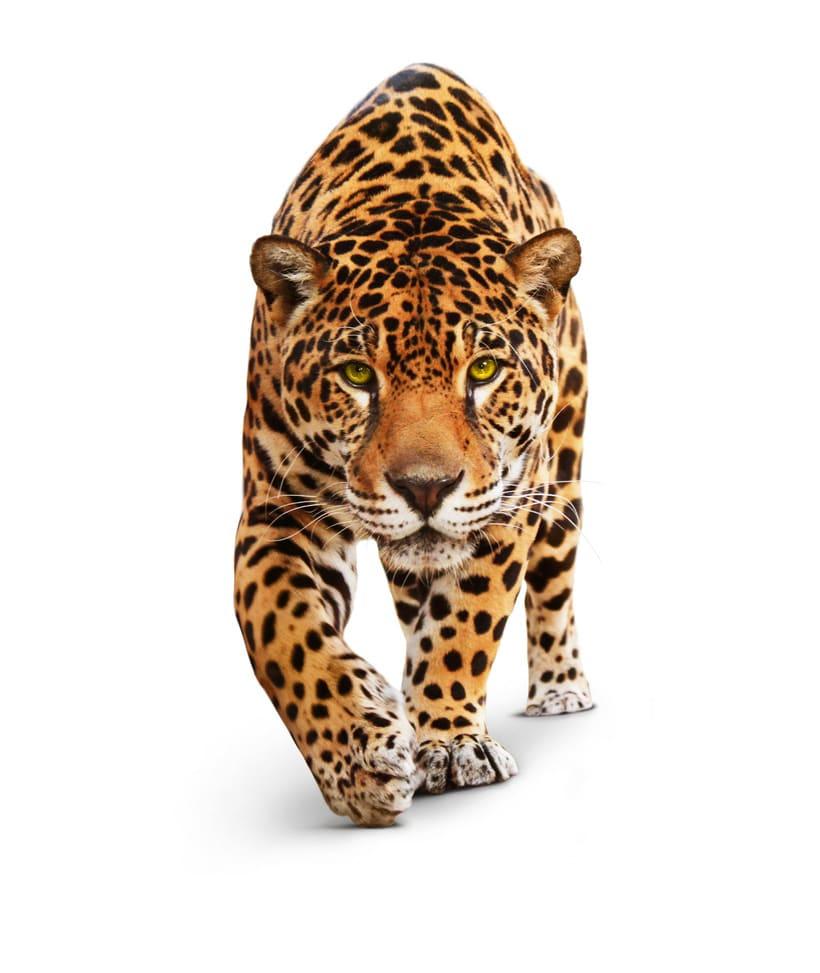 Jaguar House 2