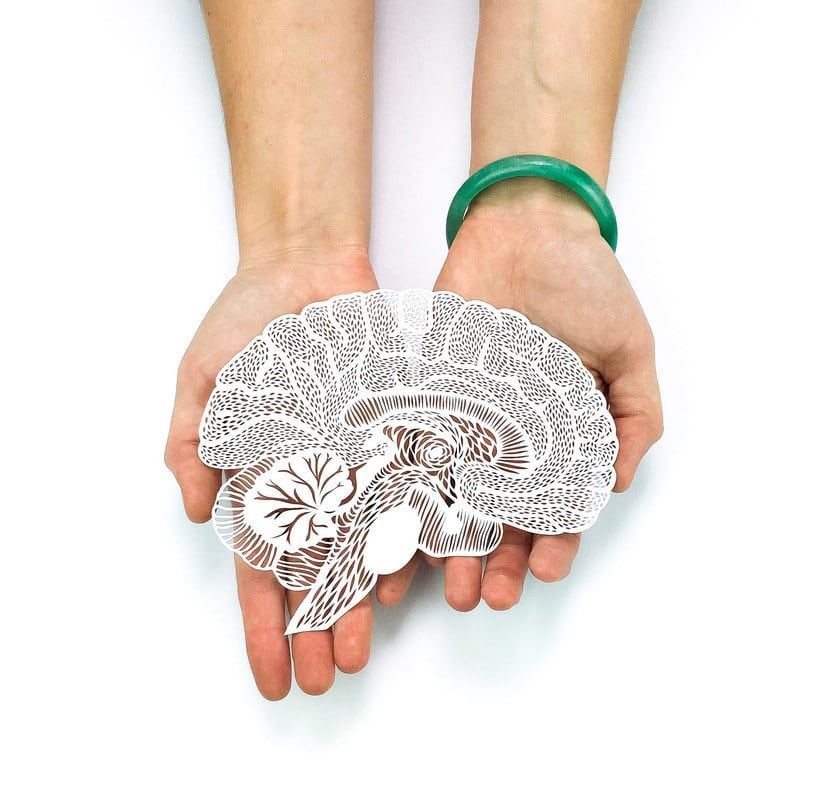 Los órganos vitales tallados en papel de Ali Harrison | Domestika