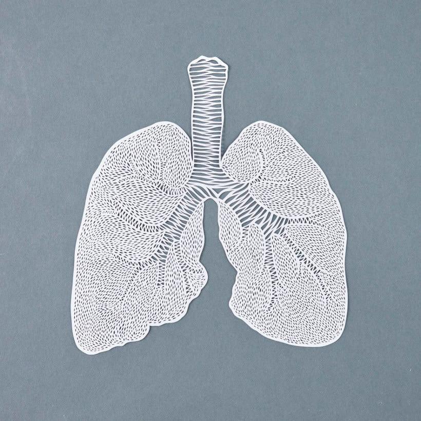 Los órganos vitales tallados en papel de Ali Harrison 9