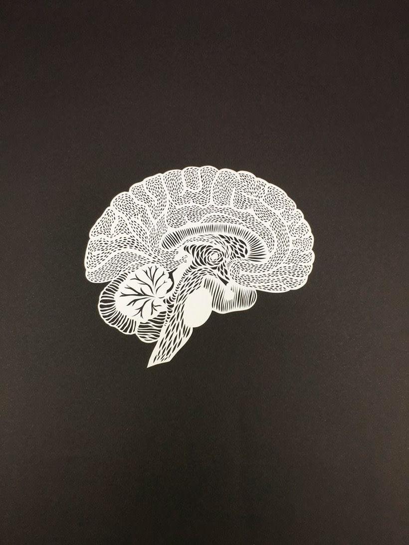 Los órganos vitales tallados en papel de Ali Harrison 11