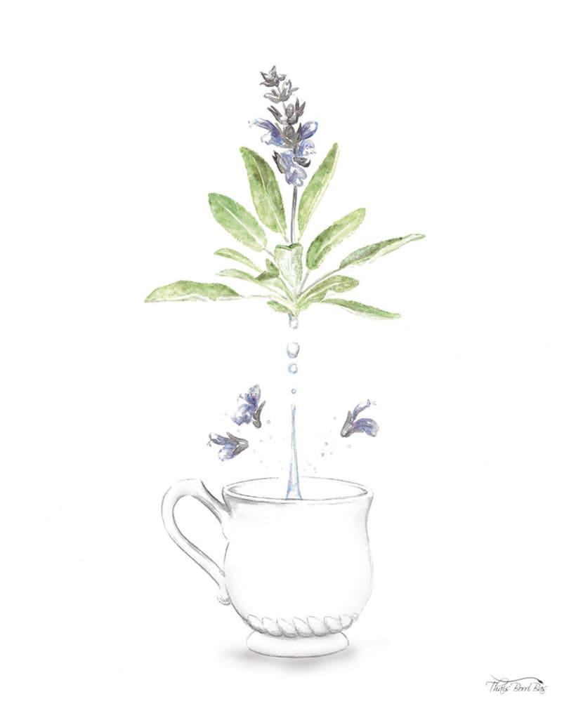 Exposición: plantas para beber 7