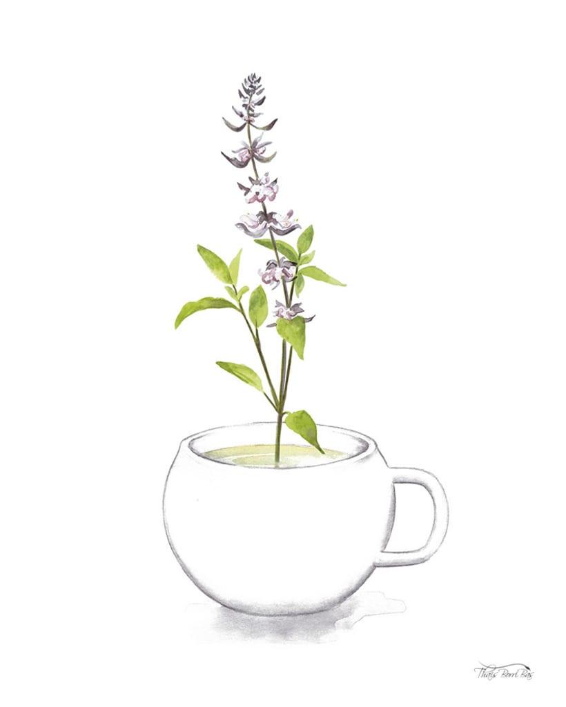 Exposición: plantas para beber 8