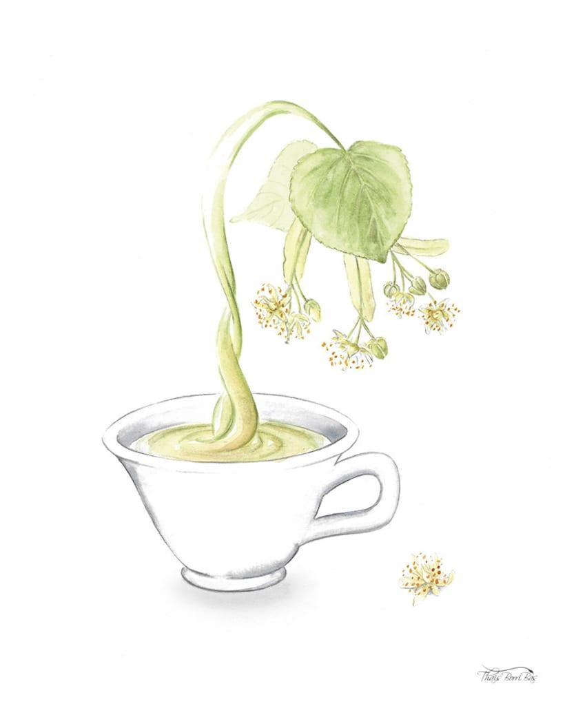 Exposición: plantas para beber 9