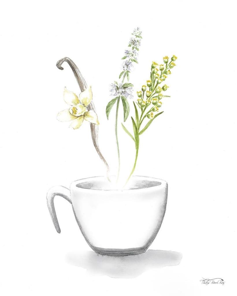 Exposición: plantas para beber 10