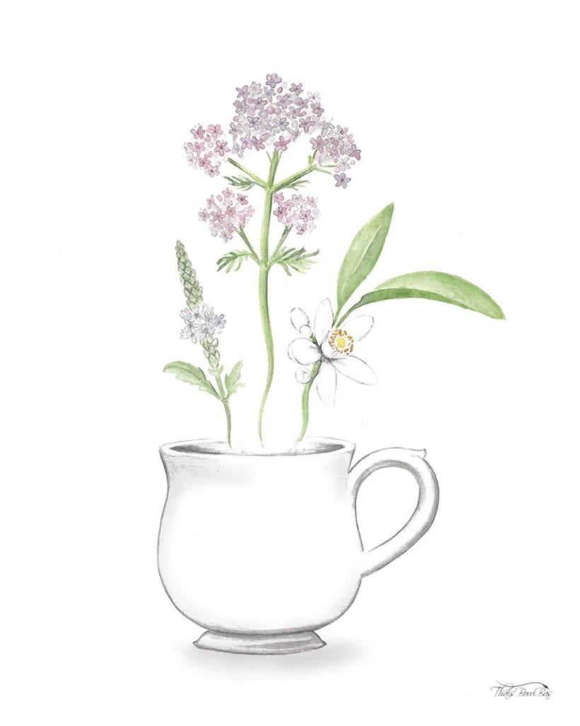 Exposición: plantas para beber 11