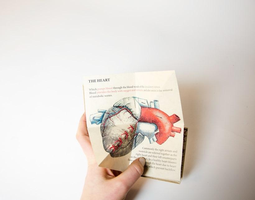 Libro acordeón 'Organs' 7