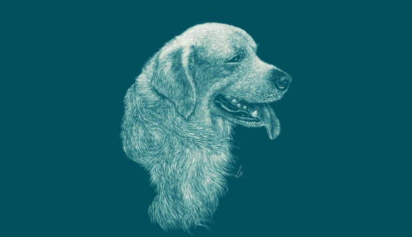 Illustration golden retriever 0