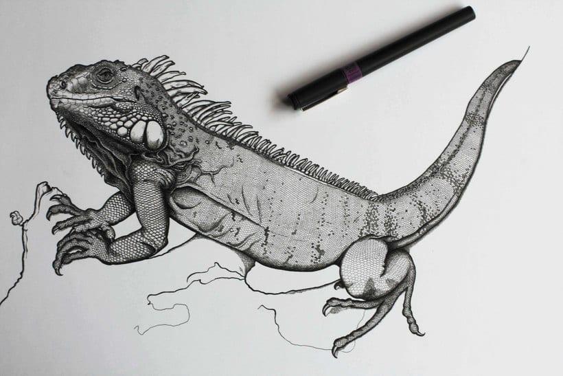 Iguana iguana 2