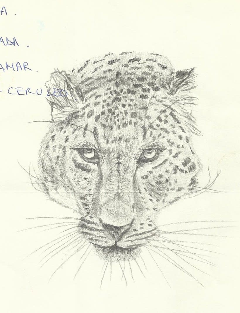 Dibujo / Drawing || Ilustración / Illustration 5