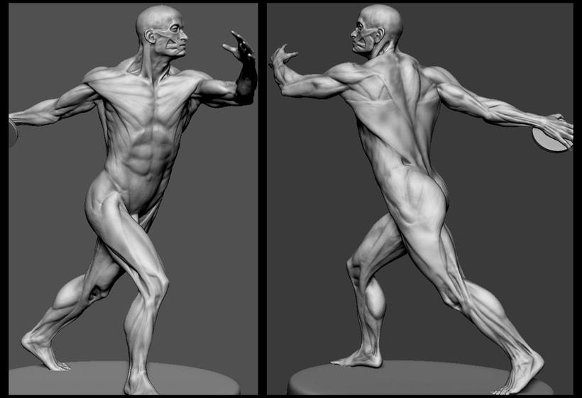 Modelado anatomia 0