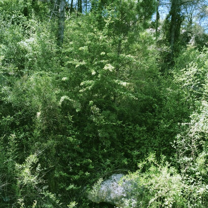 Bosques 3