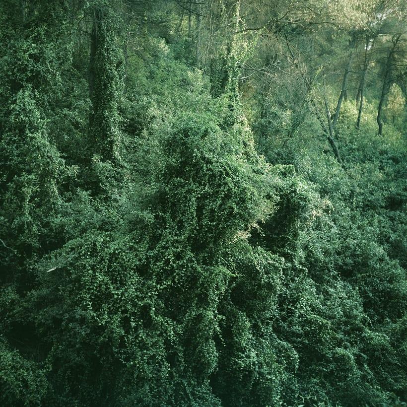 Bosques 4