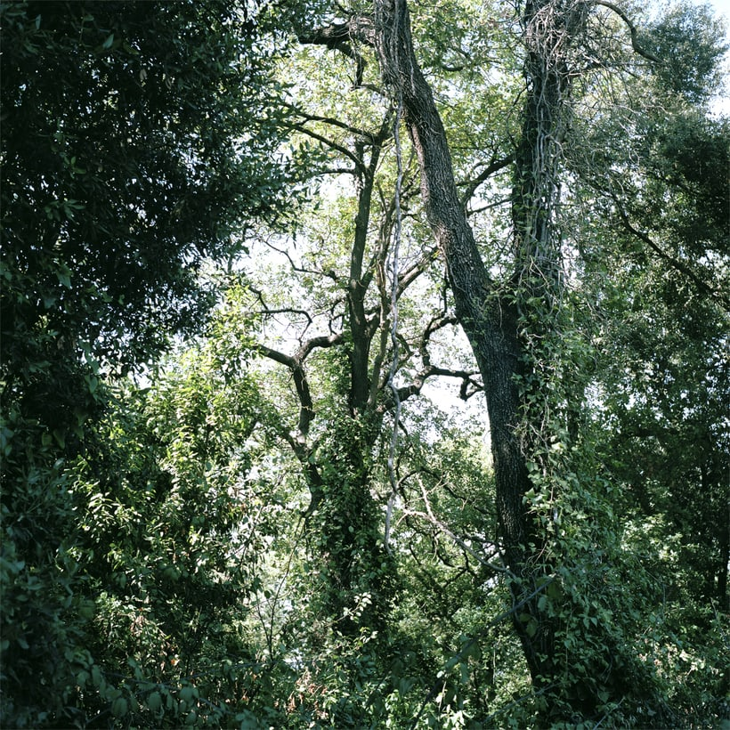 Bosques 0