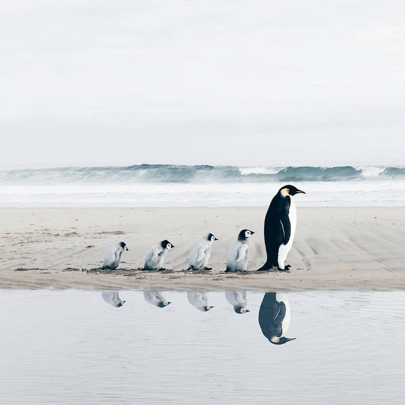 Luisa Azevedo desafía a la imaginación con sus fotografías 14