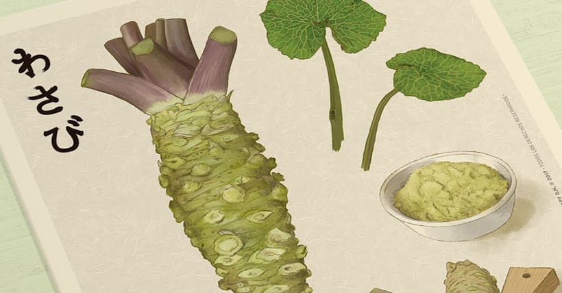 WASABI · Botanical Illustration 0
