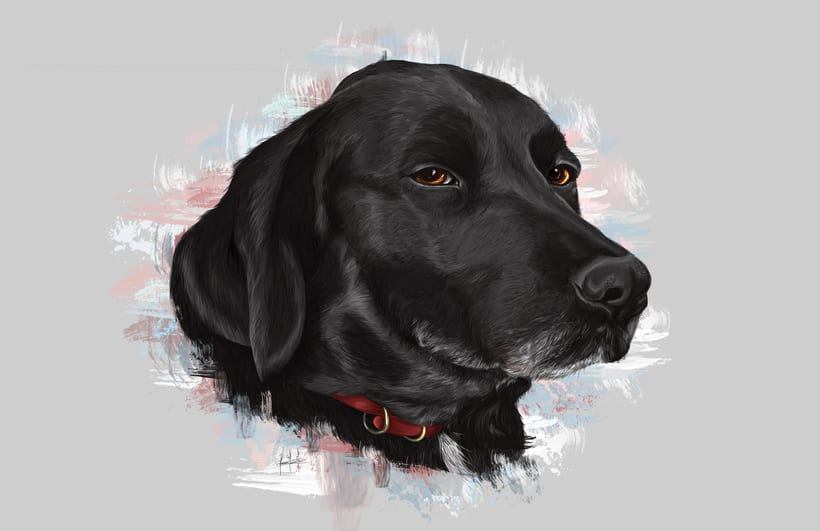 Dog portraits  2