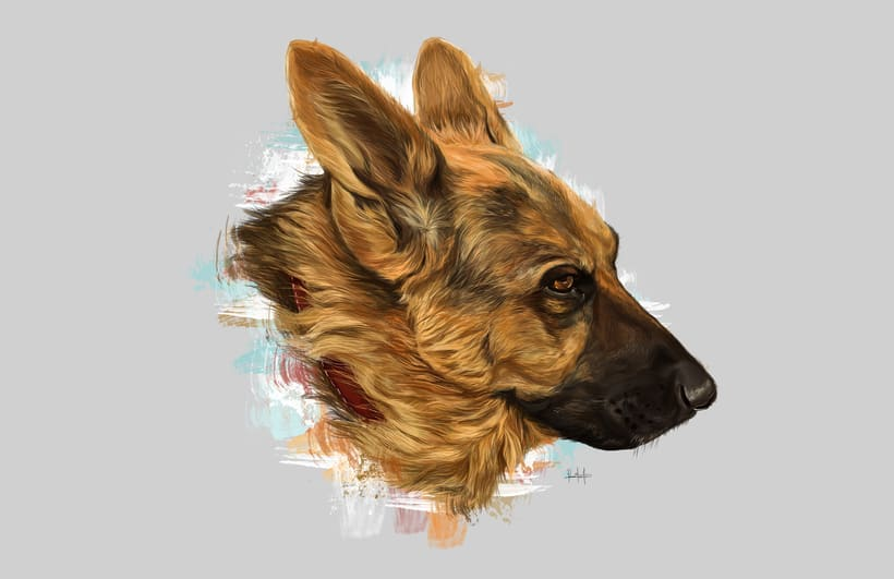 Dog portraits  3