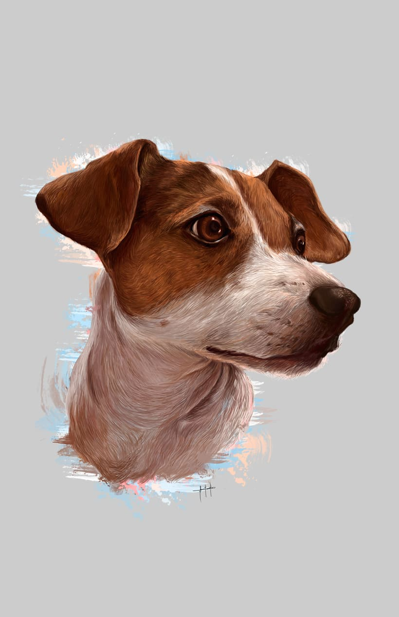 Dog portraits  6