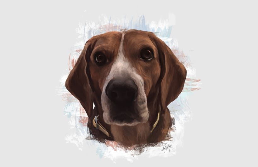 Dog portraits  7