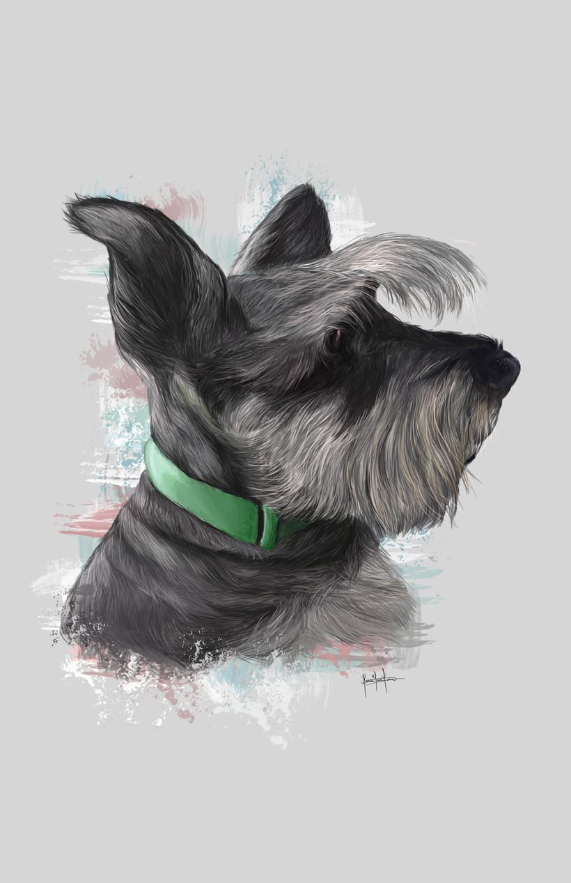 Dog portraits  11