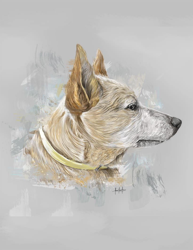 Dog portraits  12