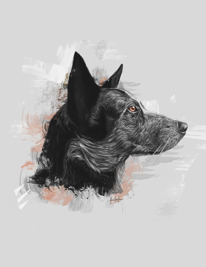 Dog portraits  0