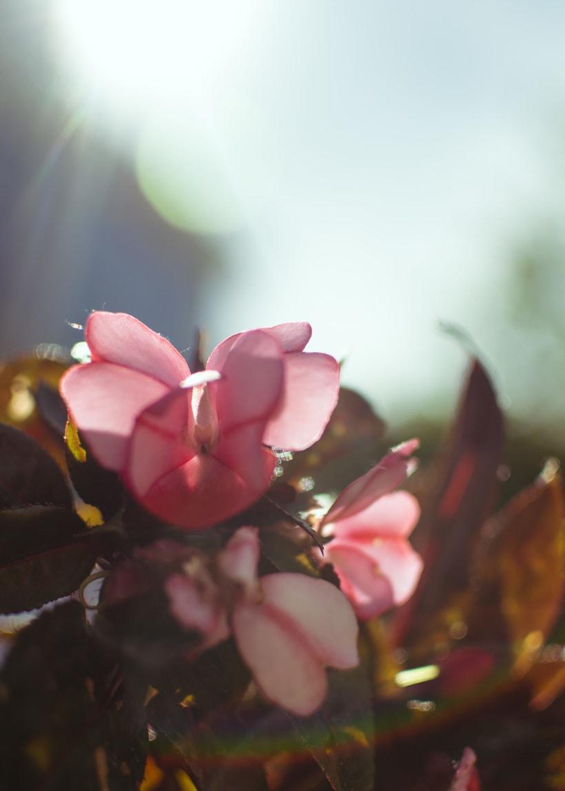 Flowers 0