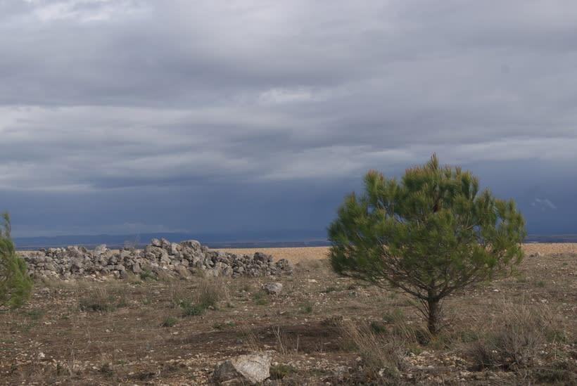 Roa de Duero 8