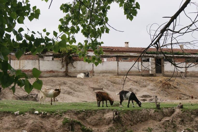 Roa de Duero 24
