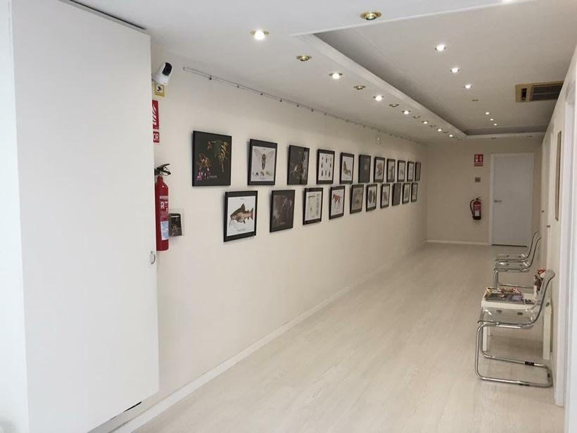 Ofrezco espacio para exposiciones en local comercial 1