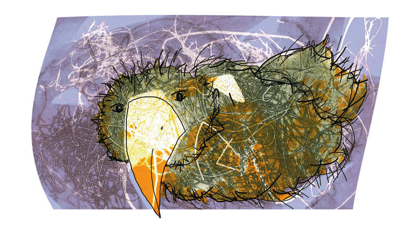 l'àvia ocell -1