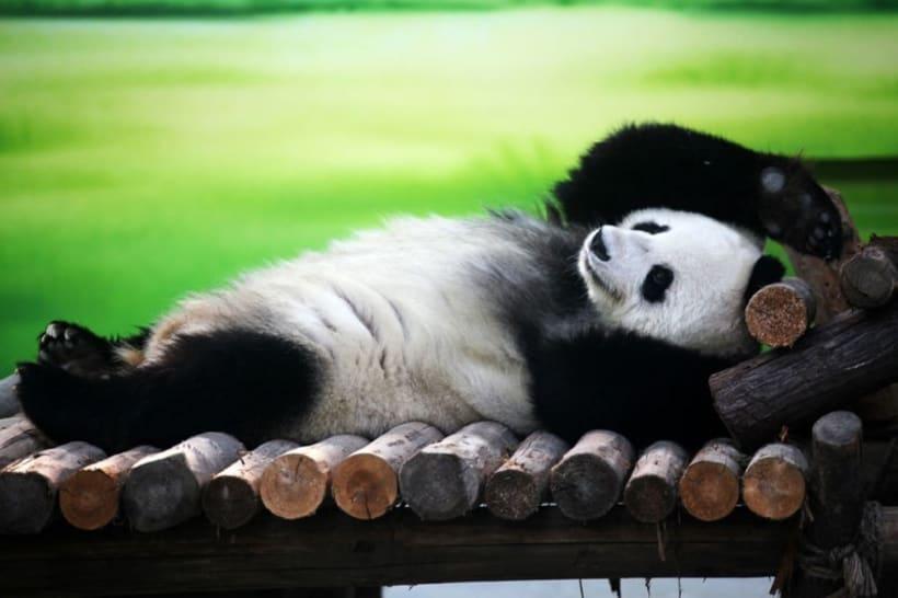 posicionar raiola manda y no el panda -1