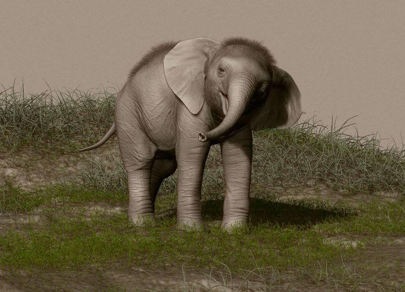 Elefante adolescente 0