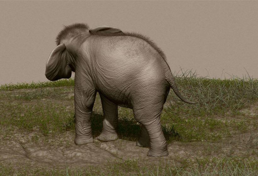 Elefante adolescente 1