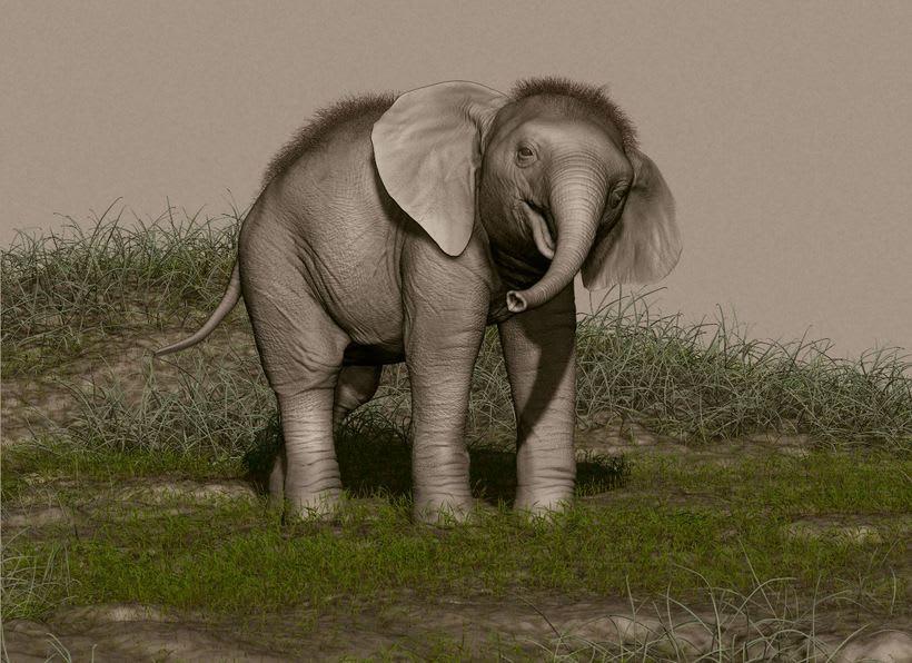Elefante adolescente 3