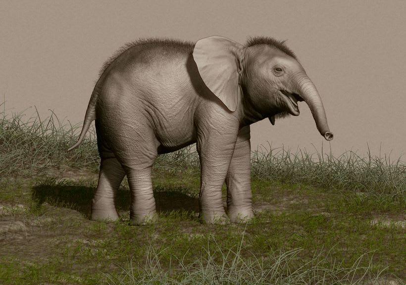 Elefante adolescente 4