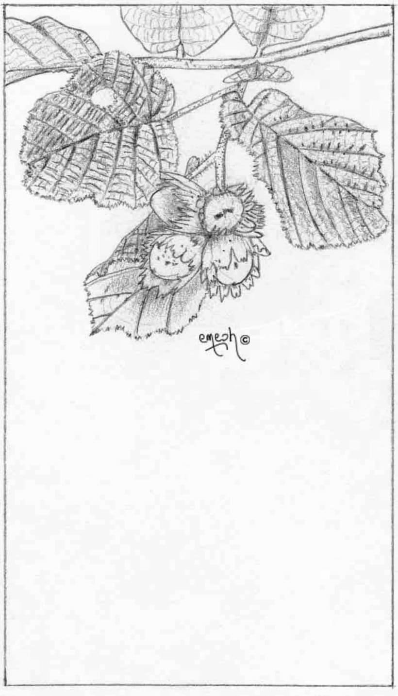 Láminas pequeñas blanco ynegro 37