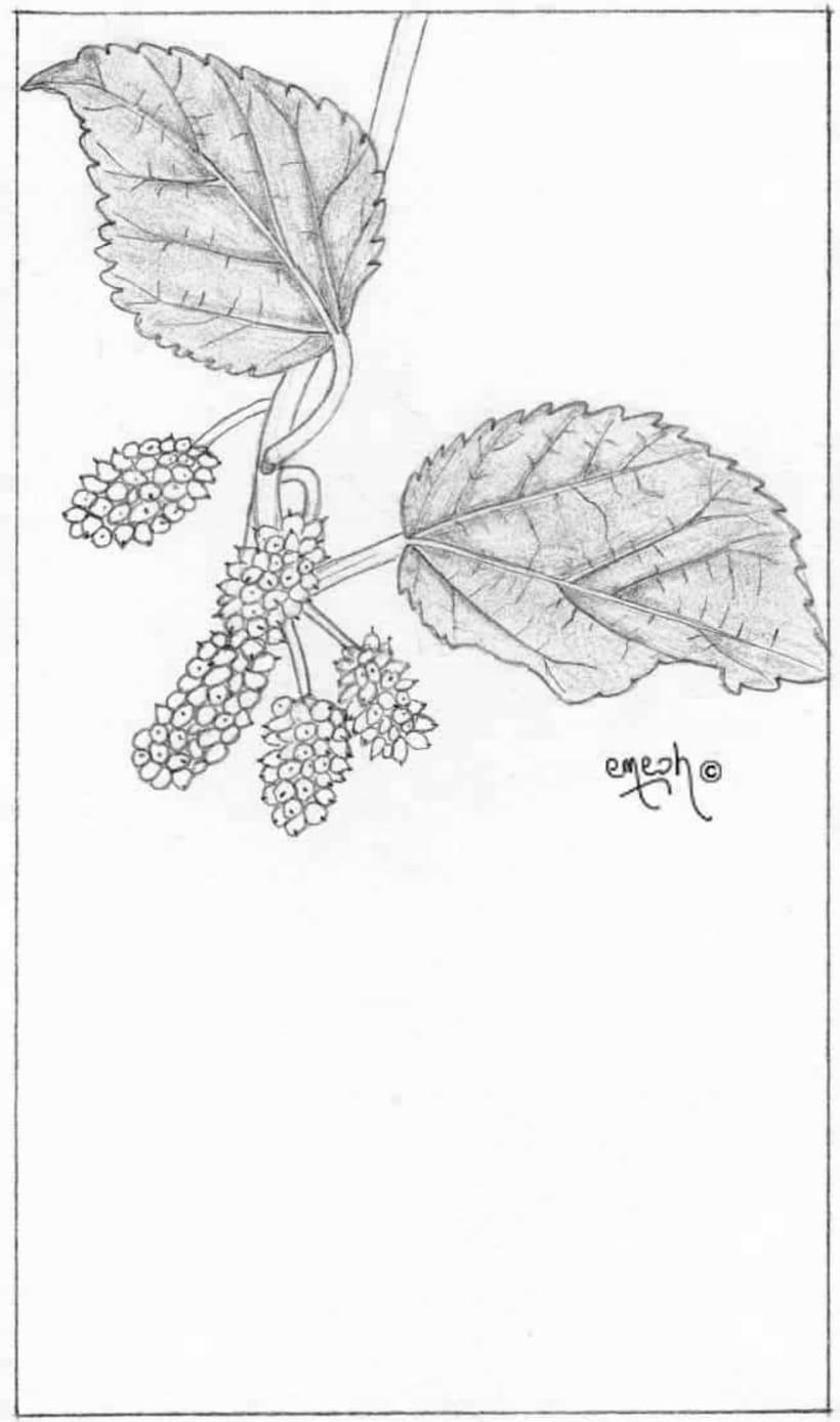 Láminas pequeñas blanco ynegro 44