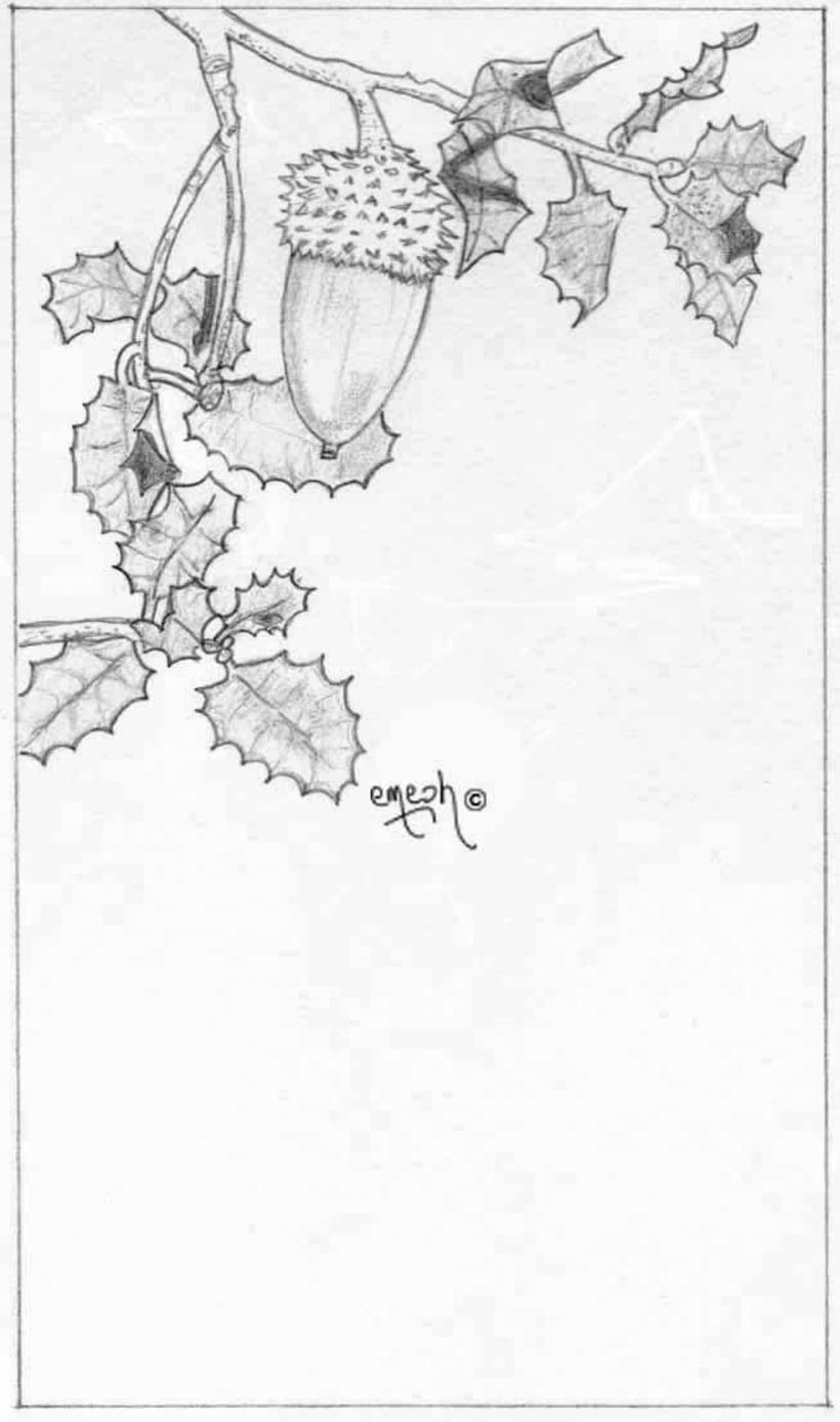 Láminas pequeñas blanco ynegro 54