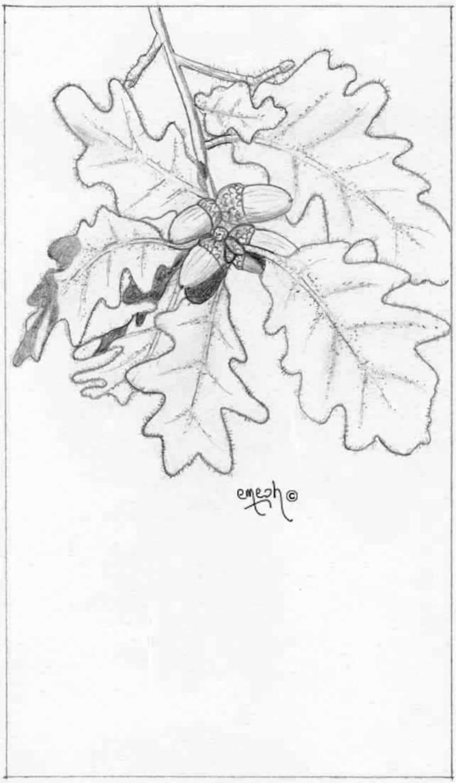 Láminas pequeñas blanco ynegro 58