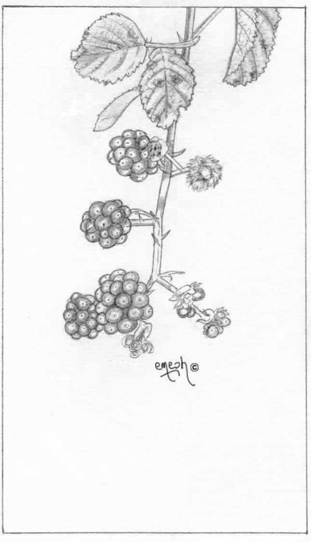 Láminas pequeñas blanco ynegro 61