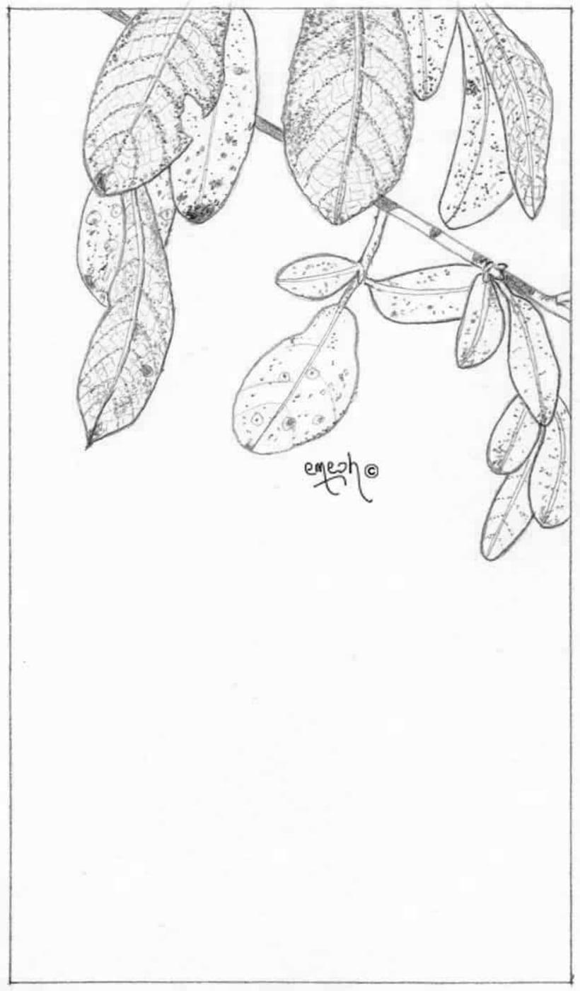 Láminas pequeñas blanco ynegro 63