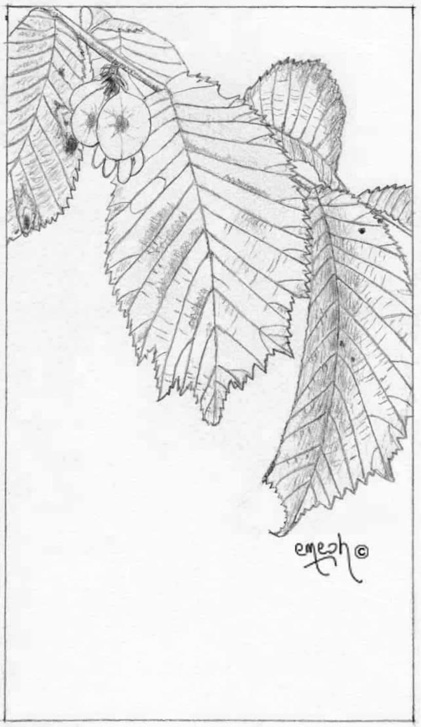 Láminas pequeñas blanco ynegro 67