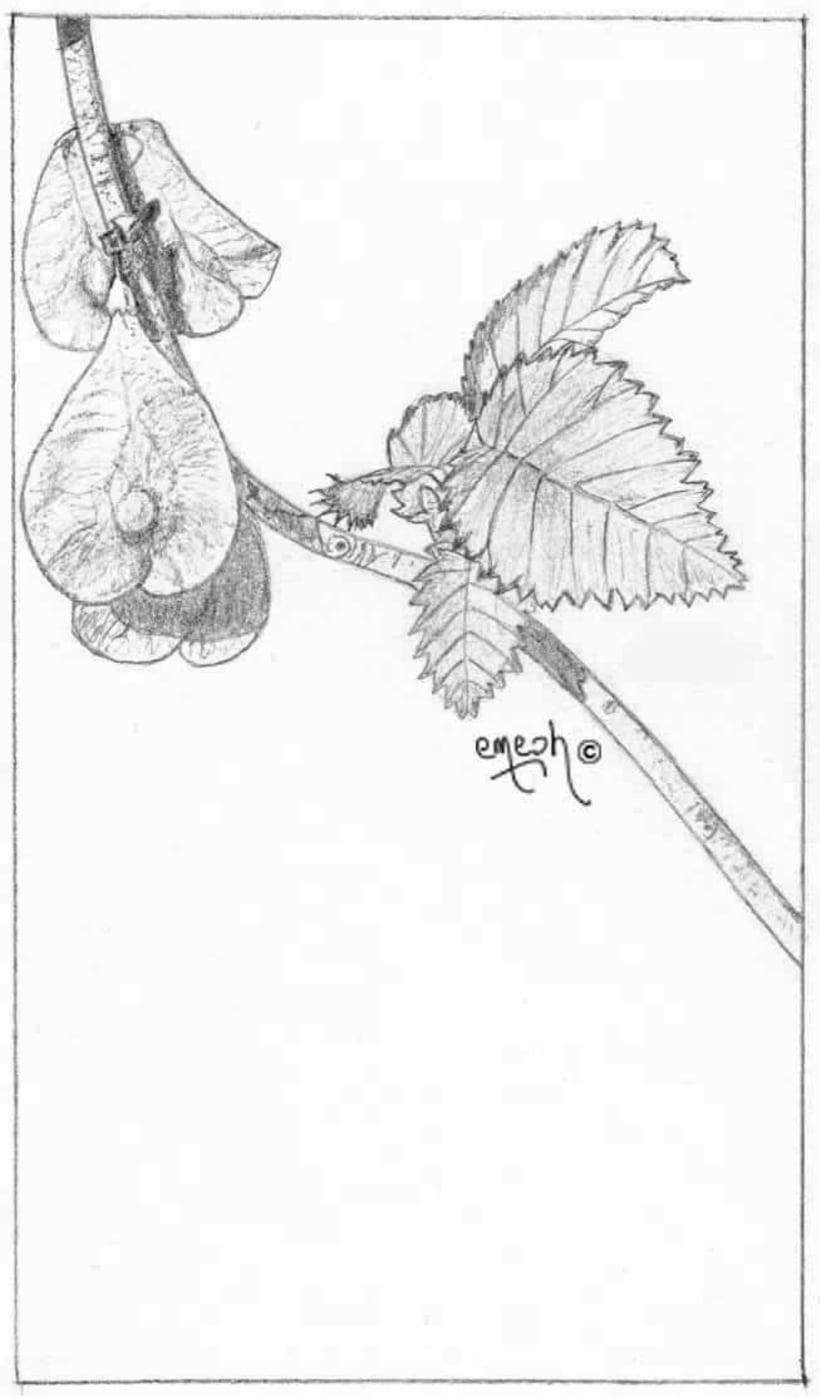 Láminas pequeñas blanco ynegro 68